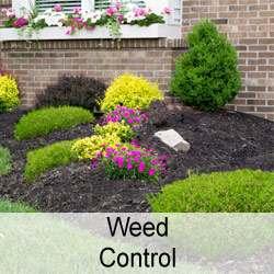 Weed Control